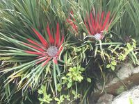 A World of Flora / Flowers, trees and plants from around the world