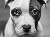 Dog I Want!!!!!