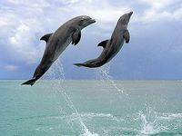 I LOVE DOLPHINS❤️