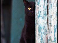 Cats || Chats dans tous ses états!