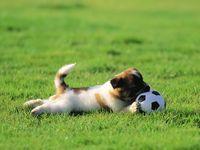 Pin Von Marianna Klimova Auf Dogs Mit Bildern Dackel Bilder