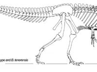 112 meilleures images du tableau Dinosauria 1 : Baryonyx