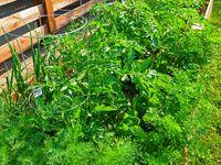 ... Eatable garden on Pinterest | Pimm's, Diy deck and Organic gardening