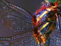 >!< Dragonfly