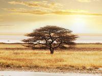 91 afrika ideen afrika safarikleidung safari chic
