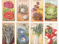 seed packets and catalogs