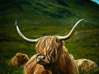 Everything Scotland