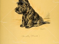 1930/'s Lucy Dawson~Black Cairn Terrier Dog Laying in Chair~ NEW Large Note Cards