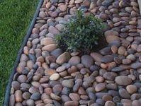 ideas for frontyard