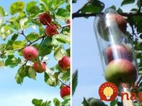 Ovocné stromy,kríky