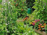 Garden - Kitchen