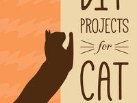 Everything Kitten
