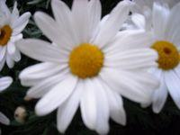 Flores,gardens,jardinería