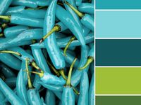 turquoise/aqua color scheme