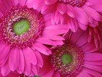 Rocío flores 1