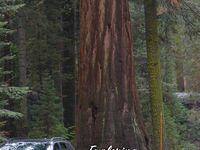 Sequoia/ Kings Canyon NPs