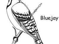 Blue Jay By Bradshaw4752 On Pinterest Jay Toronto Jays