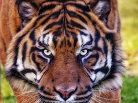 jaguars memorial day tournament