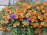 Different Types of Hanging Baskets!!!!!