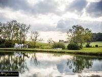 Twin Cedar Farm  / Rustic/Country Wedding Venue