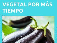 7 Ideas De Congelar Congelado Verduras Congeladas Conservación De Alimentos