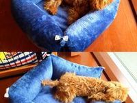 巣立った子犬子猫たち 詳細 愛知県名古屋市のペットショップ ワンラブ ワンラブ ペットショップ ペット