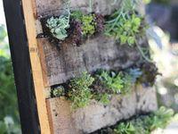 Vertical gardens, Gutter garden and Gardening