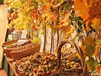 """""""October gave a party; The leaves by hundreds came...The chestnuts, oaks, & maples, and leaves of every name!"""" ~ (by George Cooper)"""