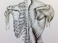 Anatomĺa