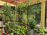 Greenhouse Ideas / Greenhouse Designs