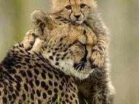Lena Karneeva Photographer Let S Play Cute Animals Animals Beautiful Animals