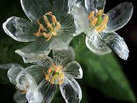 Flores fotos e ilustrações / fotos e ilustrações de flores