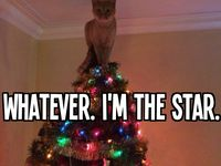 Nutty cats & dogs / Funny