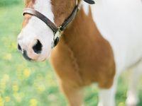 Pferde ❥