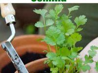 10 Ideas De Huerto Jardineria Y Plantas Jardinería En Macetas Cultivo De Plantas