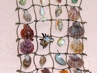 seashell craft idea