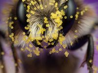 Animals ~ Bees and Bumblebees