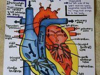 Ethical principles in nursing essay