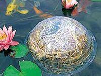 1000 Images About Fishponds On Pinterest Pond Plants