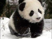Panda things