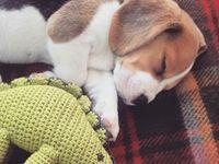 puppy in the future