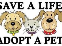 Rescue a pet today by adopting or fostering from your local shelter!   Petfinder.com is one of the many websites where you can finds lots of pets needing a new home and someone to love them ~ Adopt, don't shop.  Stop Puppy Mill Cruelty!   ~Promote awareness, Volunteer, Foster, Donate time or money, Repin to spread the word ~~~~~~~~~~~~~~~~~~~~~~~~~~~~~    For the <3 of dogs, just Do Something!!