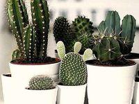 Plants/pots