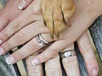 Dogs - Pet Stuff