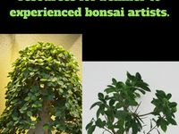 Bonsai Tree Resources / Well established, quality bonsai trees...bonsai soil, pots, drainage netting, concave cutter... Levitating pots for plants may not be necessary, but they are so cool.
