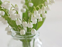 "May's Birth Flower ♥ ""White bud! ... That in meek beauty dost lean ... Thy cloistered cheek as pale as moonlight snow, ... Thou seem'st, beneath thy huge, high leaf of green, ... An Eremite beneath his mountain's brow."" ~ George Croly"