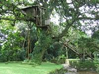 tree house galore