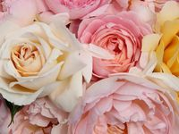 Flowers / Gardening
