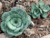 Cactus & Succulents, my favorite!!!