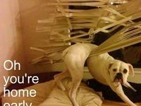 Pet Me!!! ;-)